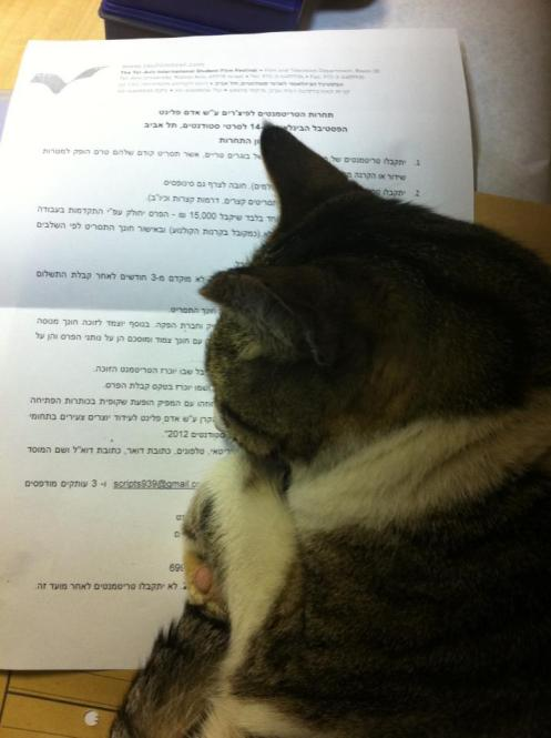 A Cat is Sleeping on the Regulations Sheet of a Feature Film Treatments Competition